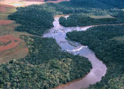 Diálogo Florestal lança documento sobre Código Florestal