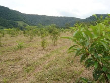 Projetos para créditos de carbono são discutidos no Fórum Florestal BA