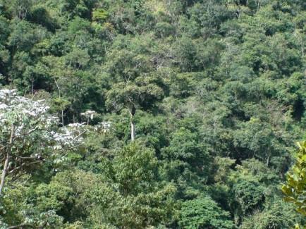 Fórum Florestal Mineiro envia oficio a governador de Minas em defesa da Mata Seca