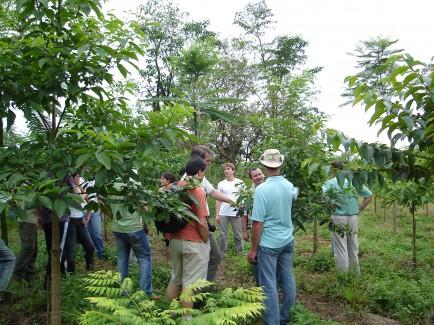 Fórum Florestal Paraná e Santa Catarina realizará seminário sobre a Mata Atlântica