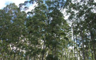Minc recebe documento que aponta 13 pontos críticos para o desenvolvimento florestal no RJ