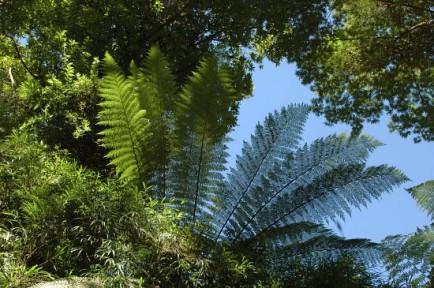 Lançamento de proposta de consenso para o Código Florestal