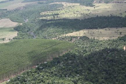 Fórum Florestal da Bahia convida para reunião em Mucuri