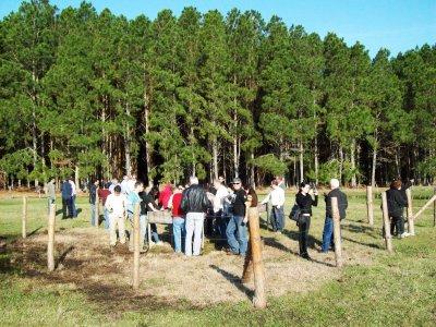Fórum RS lança cartilha sobre controle da dispersão do pinus