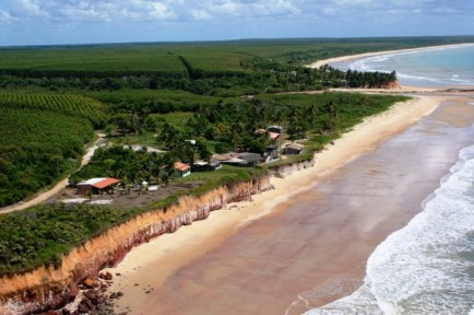 Fórum Florestal lança edital para realização de Diagnóstico Socioeconômico e Ambiental em Mucuri/BA
