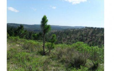 Seminário do Fórum Florestal Gaúcho debateu dispersão do pinus