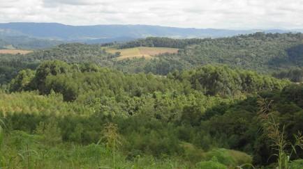 Diálogo Florestal comemora 10 anos com Encontro Nacional na Bahia