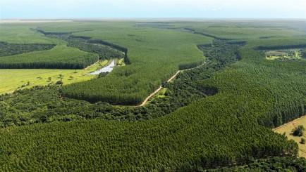 Primeira reunião itinerante do Fórum Florestal Mineiro foi em Martinho Campos