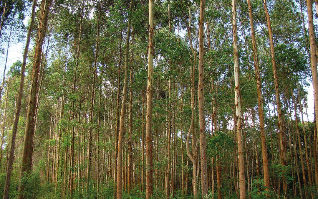 Seminário sobre Plantios Florestais acontecerá em Belo Horizonte