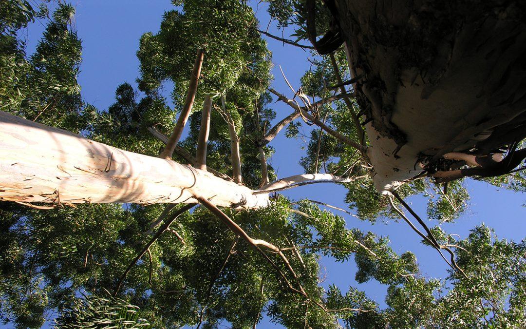 Fórum Florestal Mineiro lança documento sobre Plantações