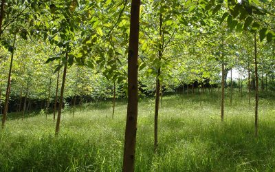 Fórum Florestal do Extremo Sul da Bahia contrata secretário(a) executivo(a)
