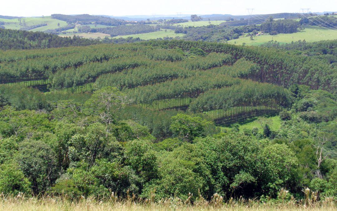 Lançamento da Coalizão Brasil Clima, Florestas e Agricultura