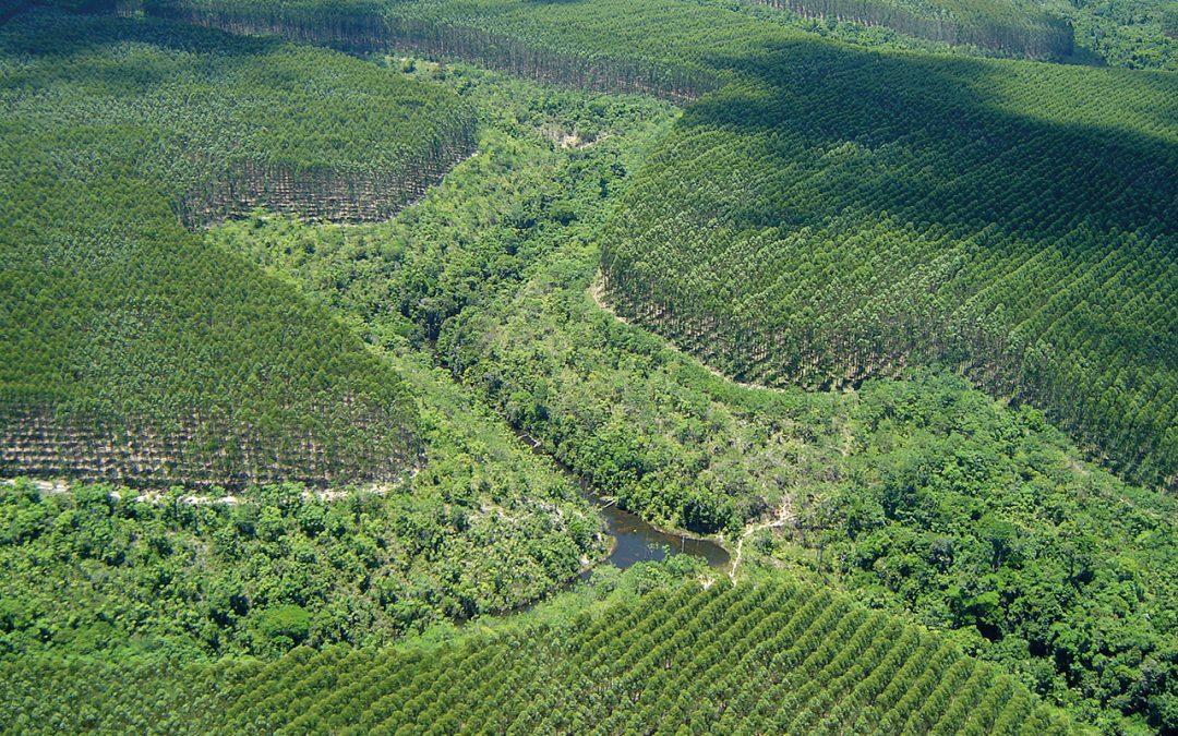 Fórum Florestal Baiano apresenta resultados da reunião em Mucuri e pauta do próximo encontro
