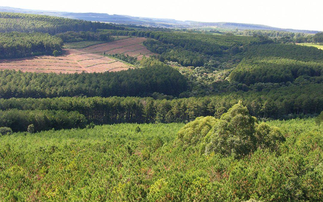 Começam rodadas dos fóruns regionais do Diálogo Florestal