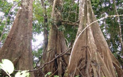 Carta aberta: Pedido de veto às Medidas Provisórias 756 e 758 que reduzem a proteção florestal no Brasil