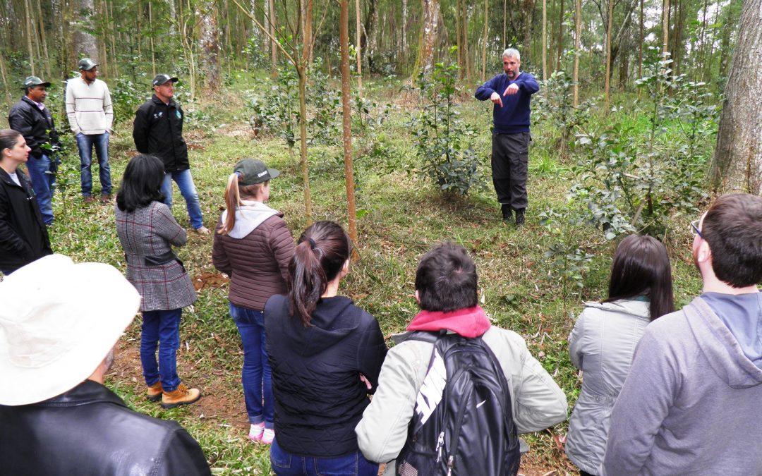 Fórum Florestal PR e SC debate estratégias de restauração florestal