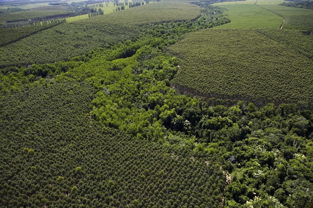 Sustentabilidade da região é pauta do Fórum Florestal Bahia