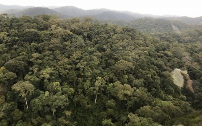 Diálogo Florestal lança relatório com conquistas de 2019
