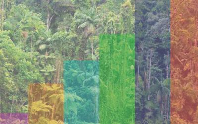 Fórum Florestal Capixaba lança nova publicação