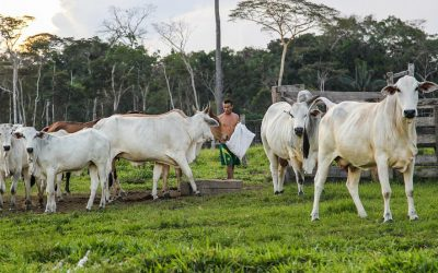 Fórum Florestal Mineiro lança projeto de comunicação