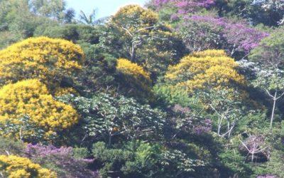 Fórum Florestal Capixaba lança publicação com ações de 2019 e 2020